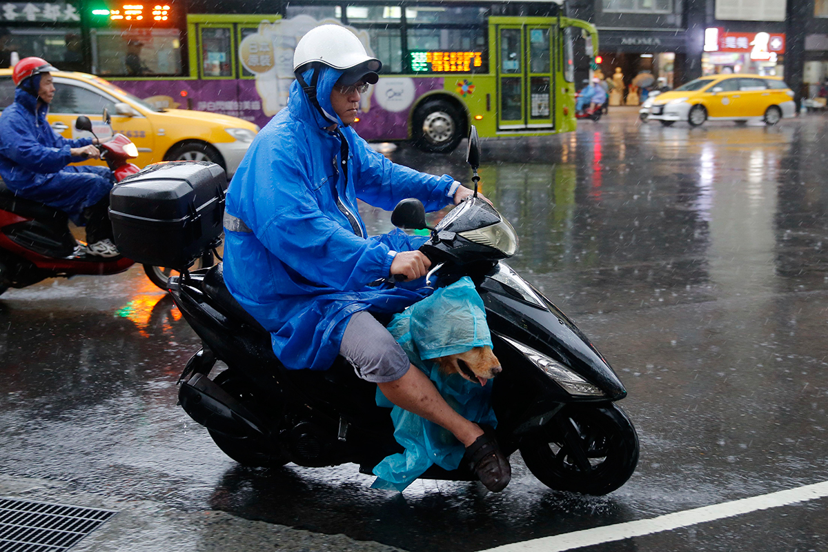 台灣多地豪雨 狗狗也穿雨衣出行