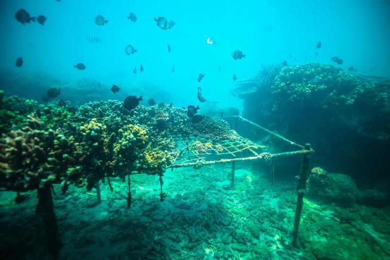 圖:海南省國家5A級景區分界洲島全景/資料圖片   珊瑚礁是許多海洋生物的「家」,珊瑚礁生態系統是地球上最古老、最多彩、也是最珍貴的生態系統之一。為了保護海洋生態環境,實現可持續生態漁業,海南省推動熱帶海洋牧場建設,在規劃建設的5個海洋牧場示範區製造礁體,移植珊瑚,投放多種海洋生物。期待在未來幾年建成具有夢幻海底景觀的海底生態公園,並與海釣、潛水等旅遊項目相結合,實現生態和經濟效益雙贏。/大公報記者 何玫 通訊員 安莉   據了解,「海洋牧場」是指在一定海域內,採用規模化漁業設施和系統化管理體制,利