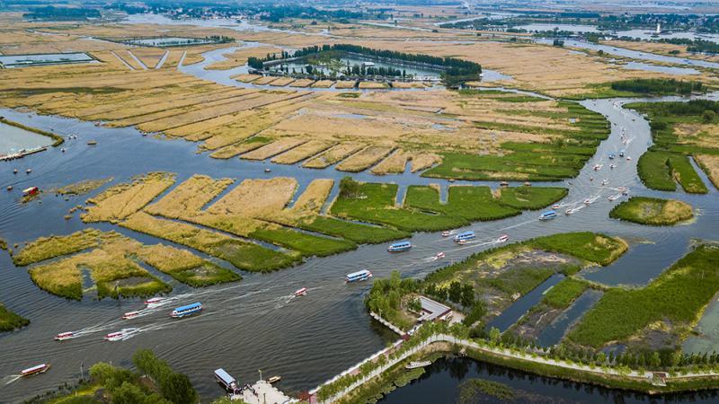 图:「五一」小长假,河北雄安新区境内的白洋淀景区风景秀丽,环境