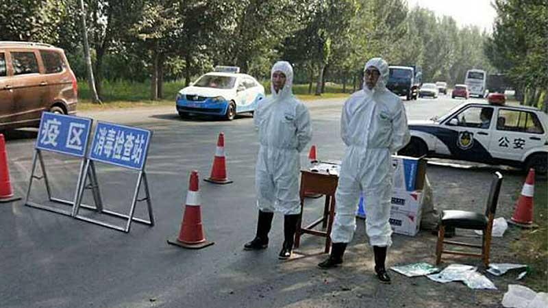 沈阳首确诊一例非洲猪瘟 疫区已封锁大量病猪被扑杀