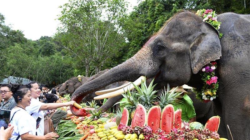 云南西双版纳举办世界大象日活动