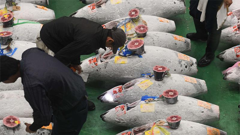 圖集丨日本豐州市場今舉行首場拍賣