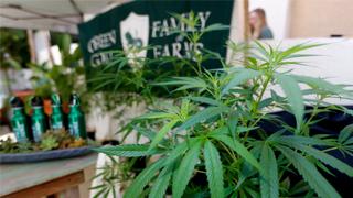 香港海关:非法进口大麻产品属刑罪