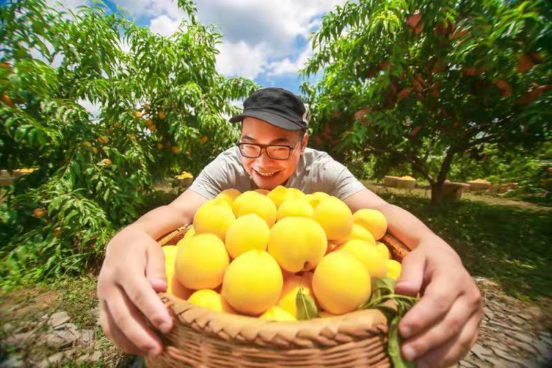 被互联网改变的黄桃生意