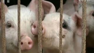 22省份发生89起非洲猪瘟疫情 部分传播途径已查明