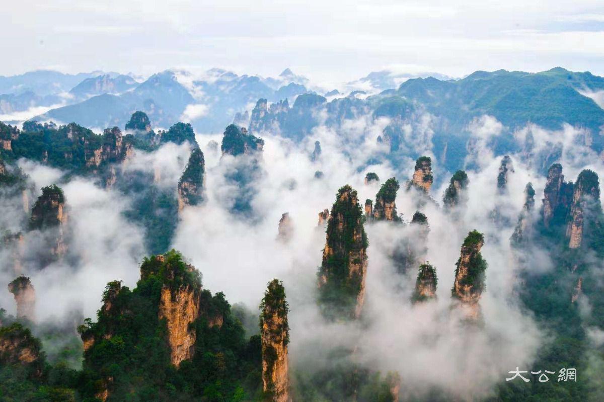 除了拥有世界自然遗产荣誉外,还先后获得中国第一个国家森林公园,首批
