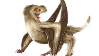 港大与内地合作研究 将羽毛起源推前7000万年