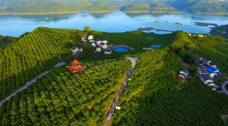 """图:重庆忠县绿化长江两岸,打造""""三峡橘海""""资料图片"""