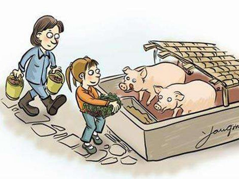 養豬業豬年話興衰