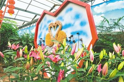 鄭州綠博園姹紫嫣紅迎新春