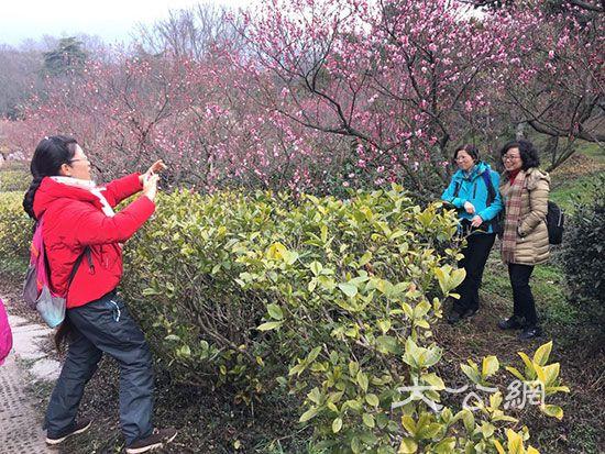 南京全球正规博彩公司排名梅花節揭幕 引眾多遊人賞梅踏春