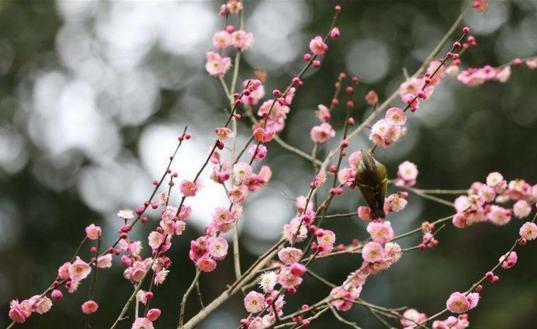 春季话养生