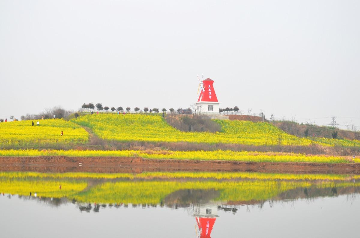 漢中百萬畝油菜花海迎客 獻上獨特亮麗風景