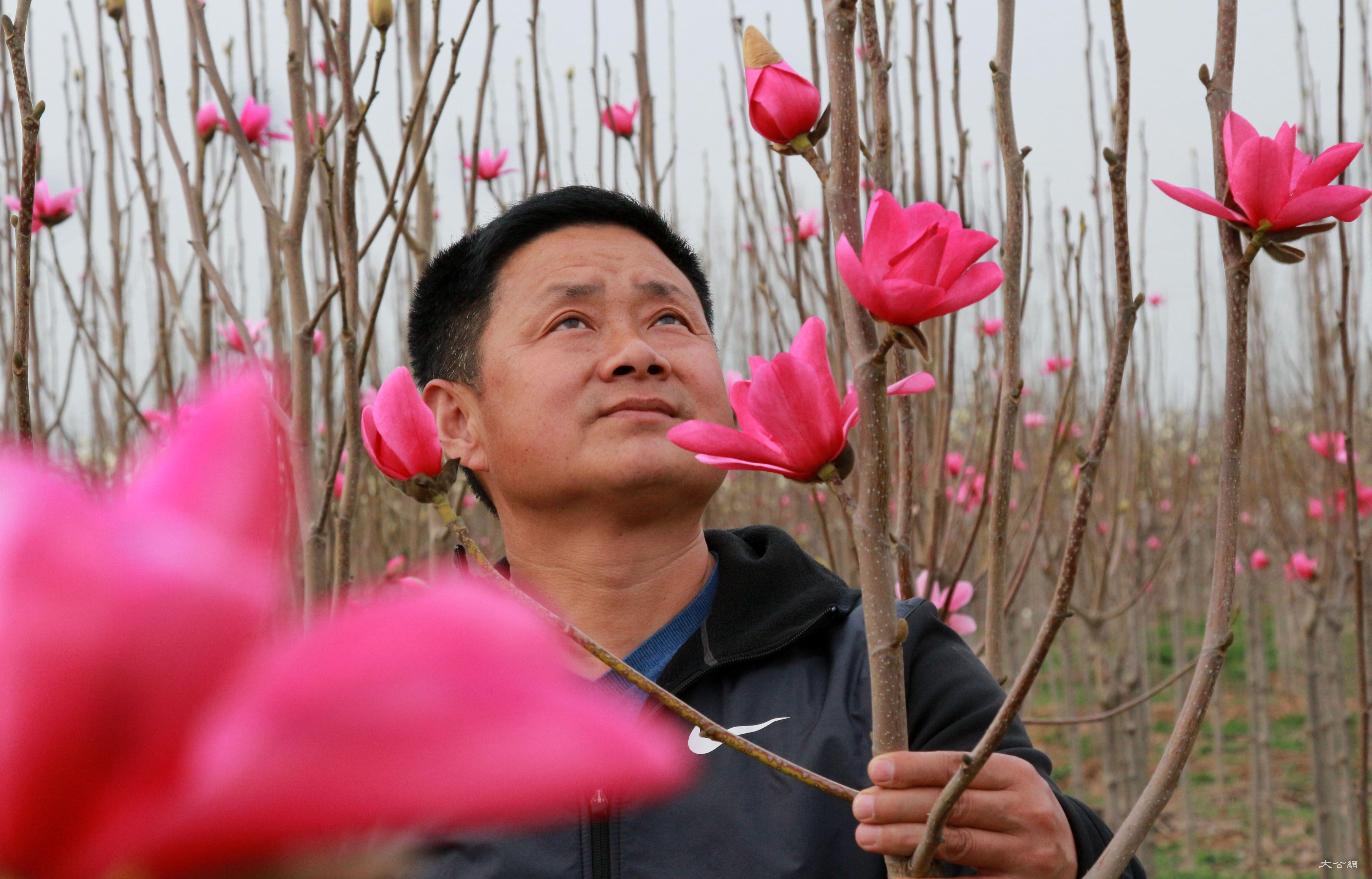 河南:春日玉蘭花田園春意濃
