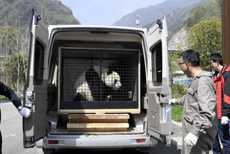 """华熊猫""""园园""""启程赴奥地利"""