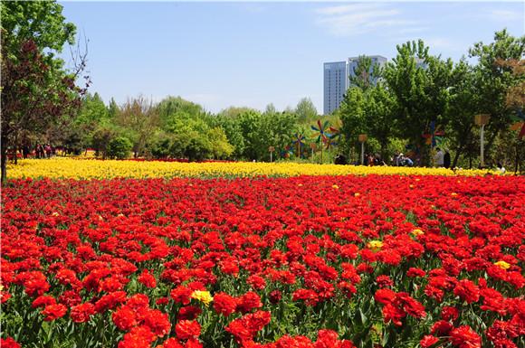 綠博園「問花節」還在持續中 鬱金香更艷麗絢爛