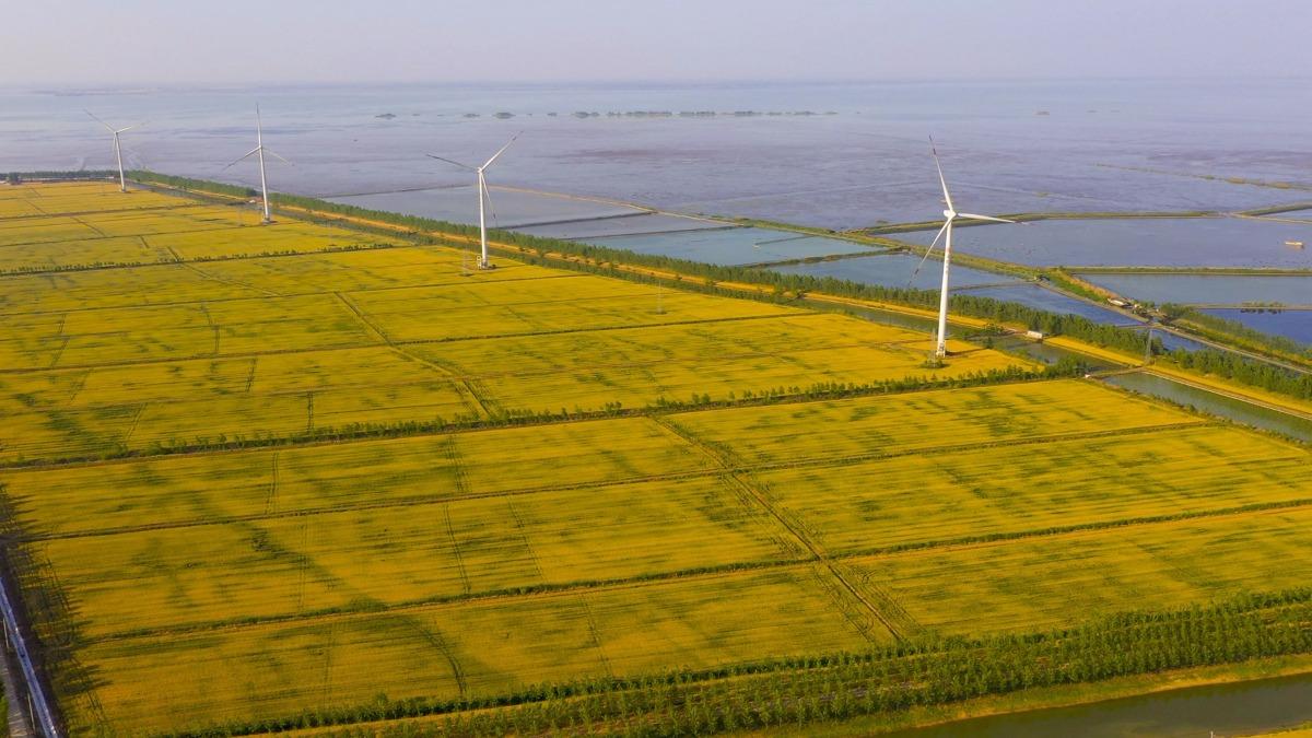 洋河股份与江苏农垦共建30万亩绿色原粮基地 推进多领域融合发展
