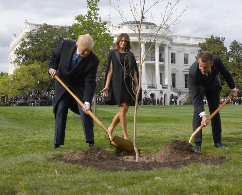 """在美""""监护""""下 法美友谊之树死亡"""