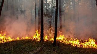 欧洲热浪北移 北极圈山火肆虐