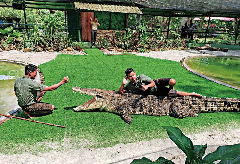 ?浮羅交怡\碧海浮潛 觀看鱷魚