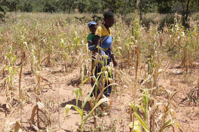 联合国:全球暖化加剧 恐酿粮食危机