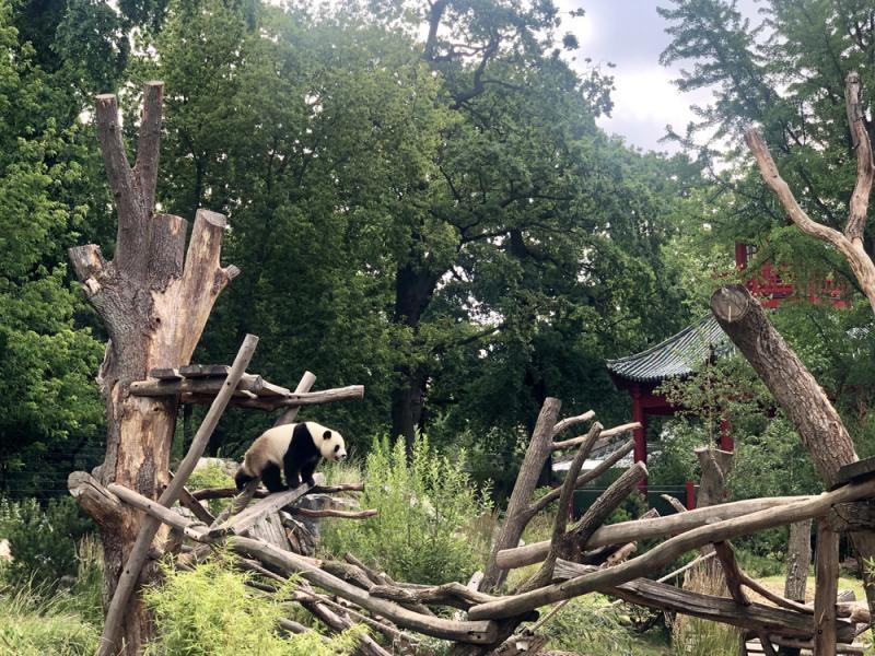 柏林漫言/在柏林动物园看大熊猫/余 逾