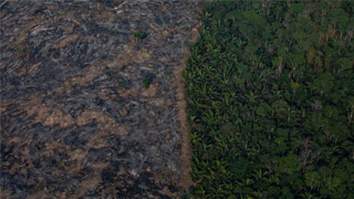 G7拨2000万助灭亚马逊大火 特朗普缺席气候会议