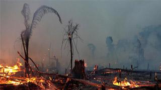 ?巴西总统不出席雨林大火区域峰会