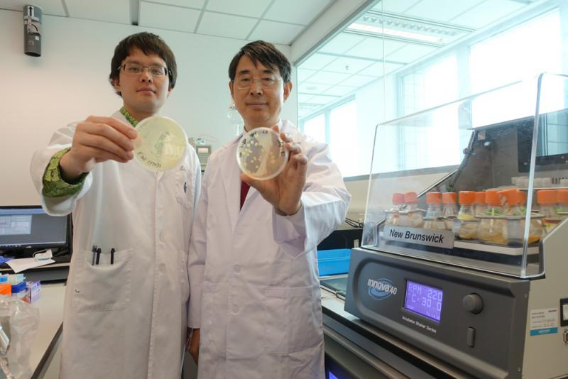 ?科大破解大肠杆菌致癌机制