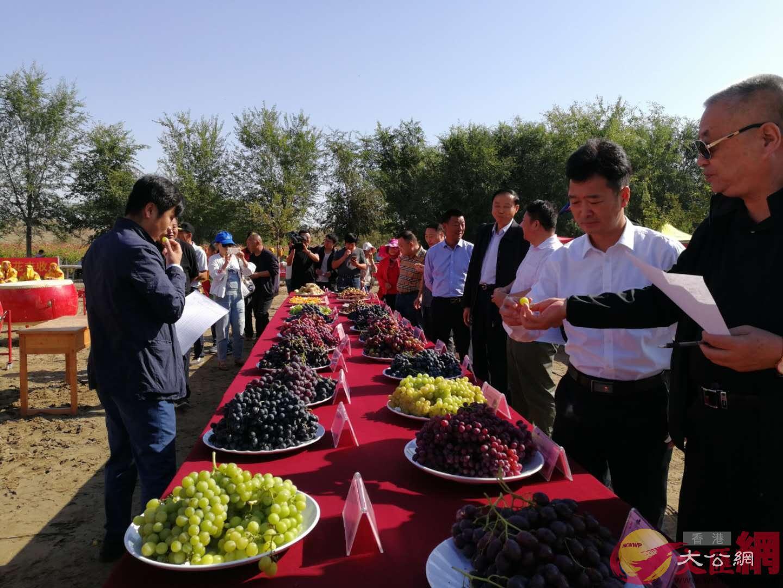 新疆石河子舉辦系列活動慶祝「中國農民豐收節」