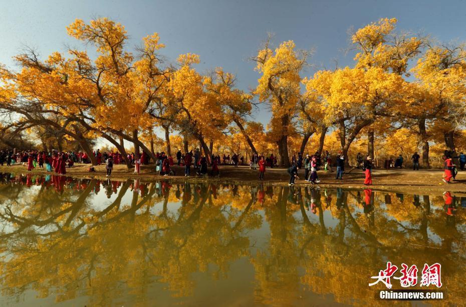 胡楊林正值觀賞季 呈現夢幻般金黃色