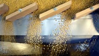 农业农村部:前8月大豆进口总量5639万吨 同比减少约9%