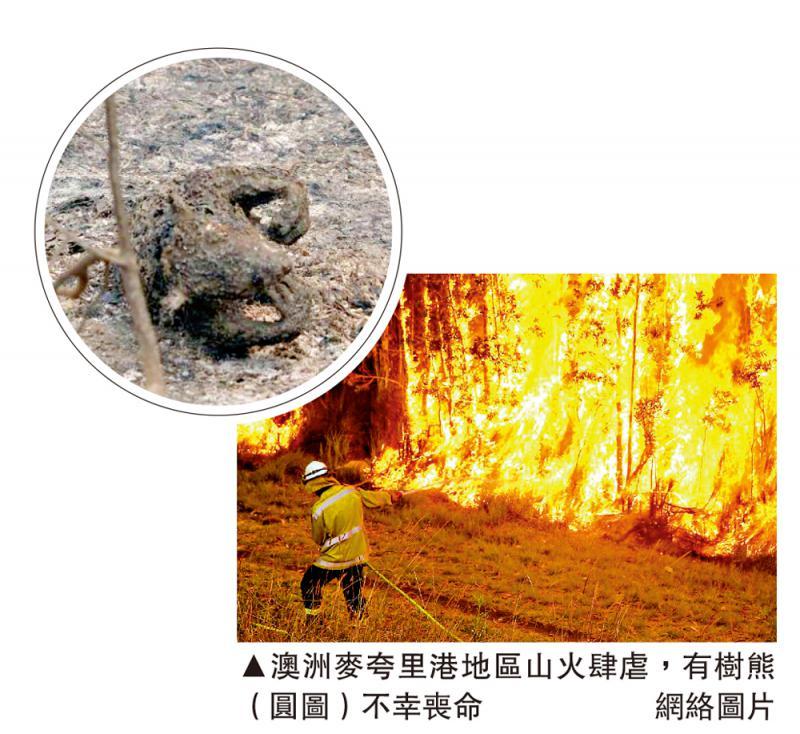 ?澳東山火延燒 數百樹熊恐喪命