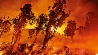 ?加州山火未熄 州长与特朗普爆口水战