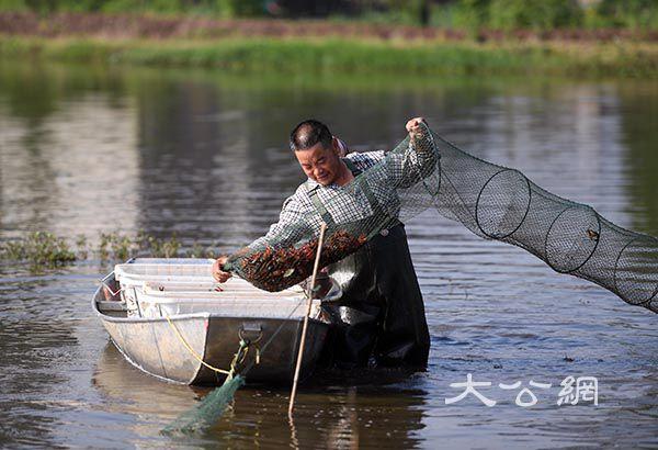 湖南南縣發揮綠色生態優勢 做強糧食產業經濟