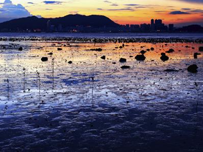 蔡志东《夕阳余晖》