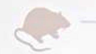 国家卫健委:2名肺鼠疫病例仍病情危重 全国无新增病例报告