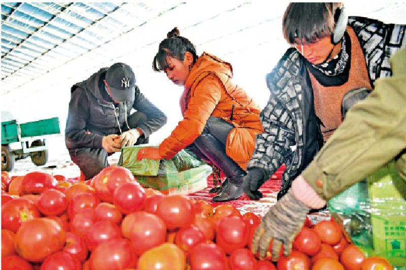 ?去年農村貧困人口減1109萬