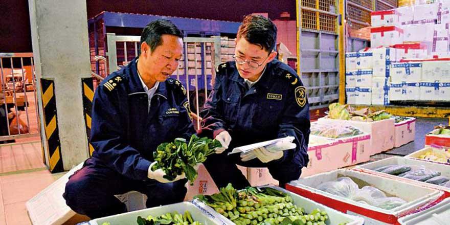货源充裕深圳供港蔬菜增逾两成 内地海关全程监管
