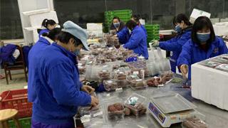 港资农场增产 日供武汉20吨蔬菜