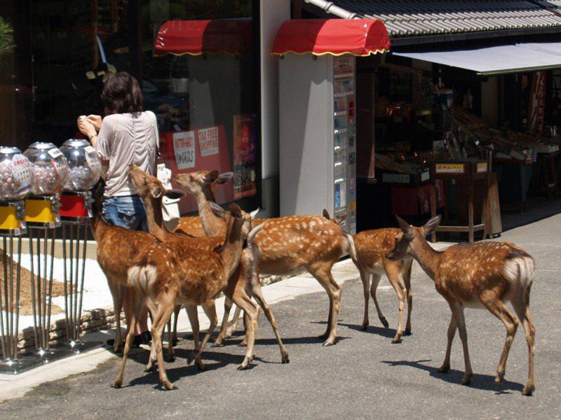 ?東南亞旅遊市場遇冷 多國籲善待中國遊客