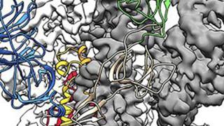新冠病毒3D高清图出炉 助研制疫苗