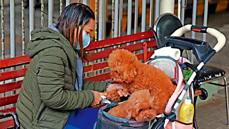 犬只染疫惹关注 专家:狗与狗之间也应拉远距离