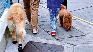 香港再有狗只新冠病毒测试呈阳性