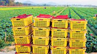 两部门:克服疫情影响 千方百计防范化解农产品卖难