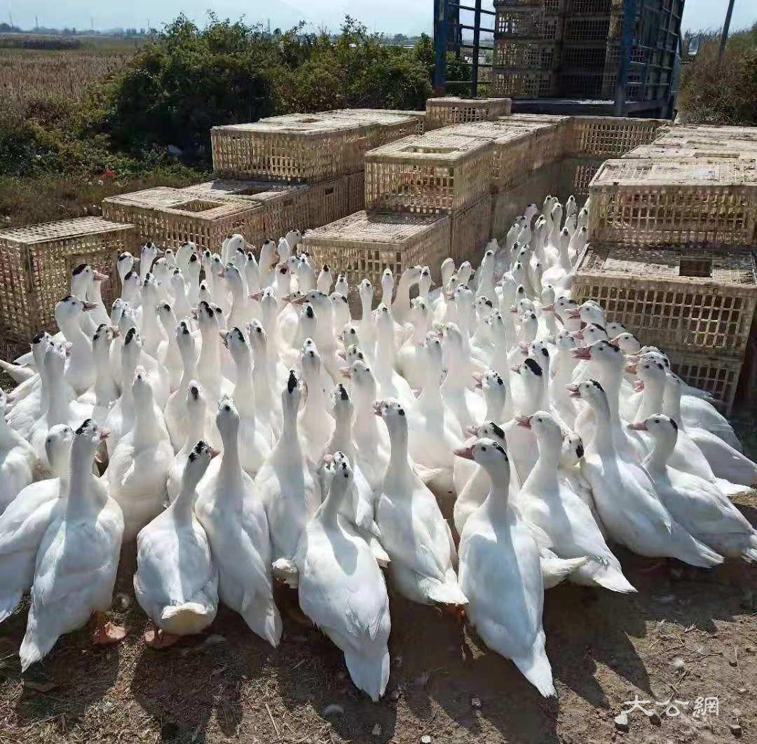 受疫情沖擊業務降六成 供港菜老板采停運和裁員措施