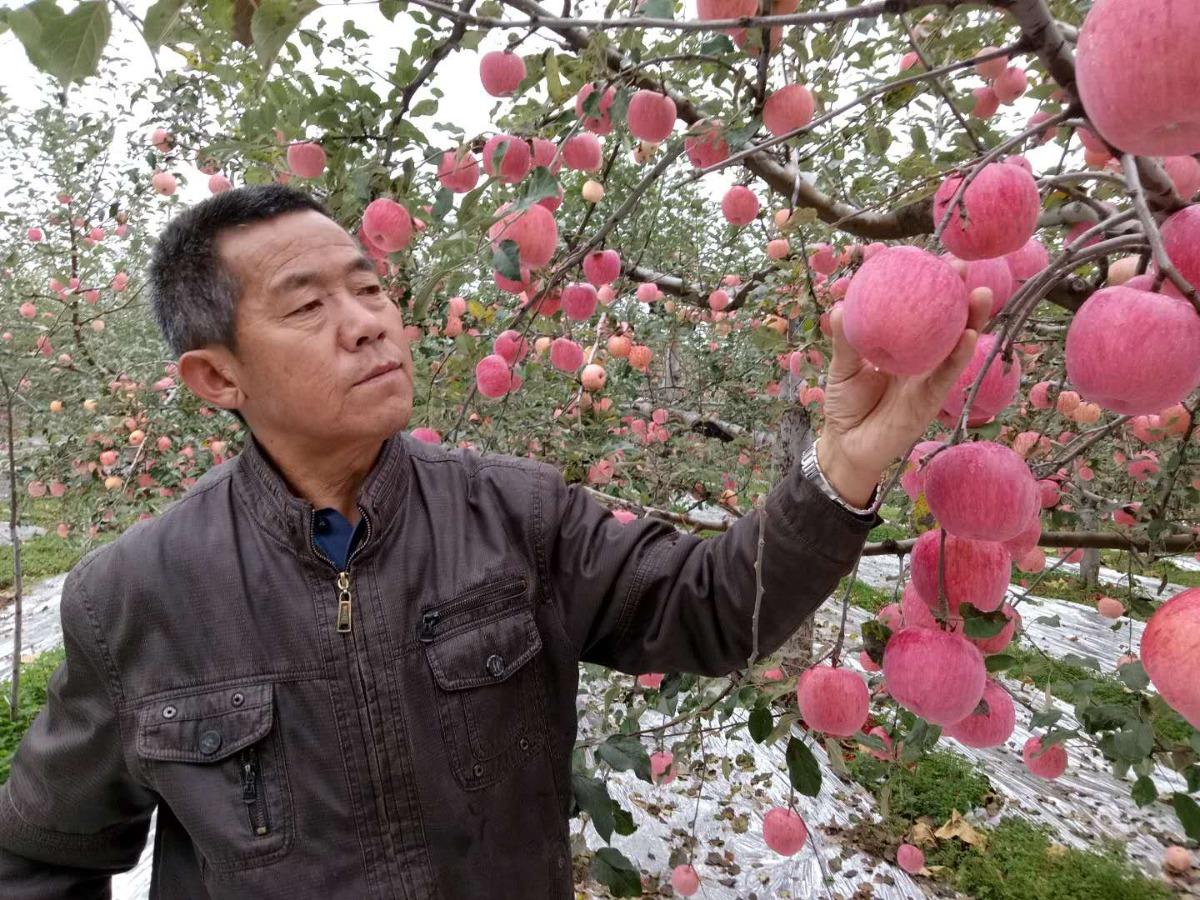 陕西63个革命老区县5年减贫289万余人
