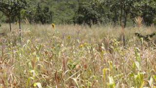世贸组织及联合国机构呼吁确保疫情下全球粮食安全