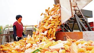 商务部称消费者无须囤粮 中国口粮完全可以自给自足