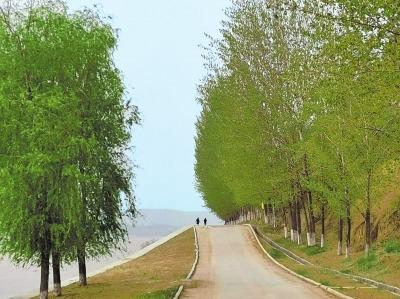三门峡:百里黄河生态廊道正飞花